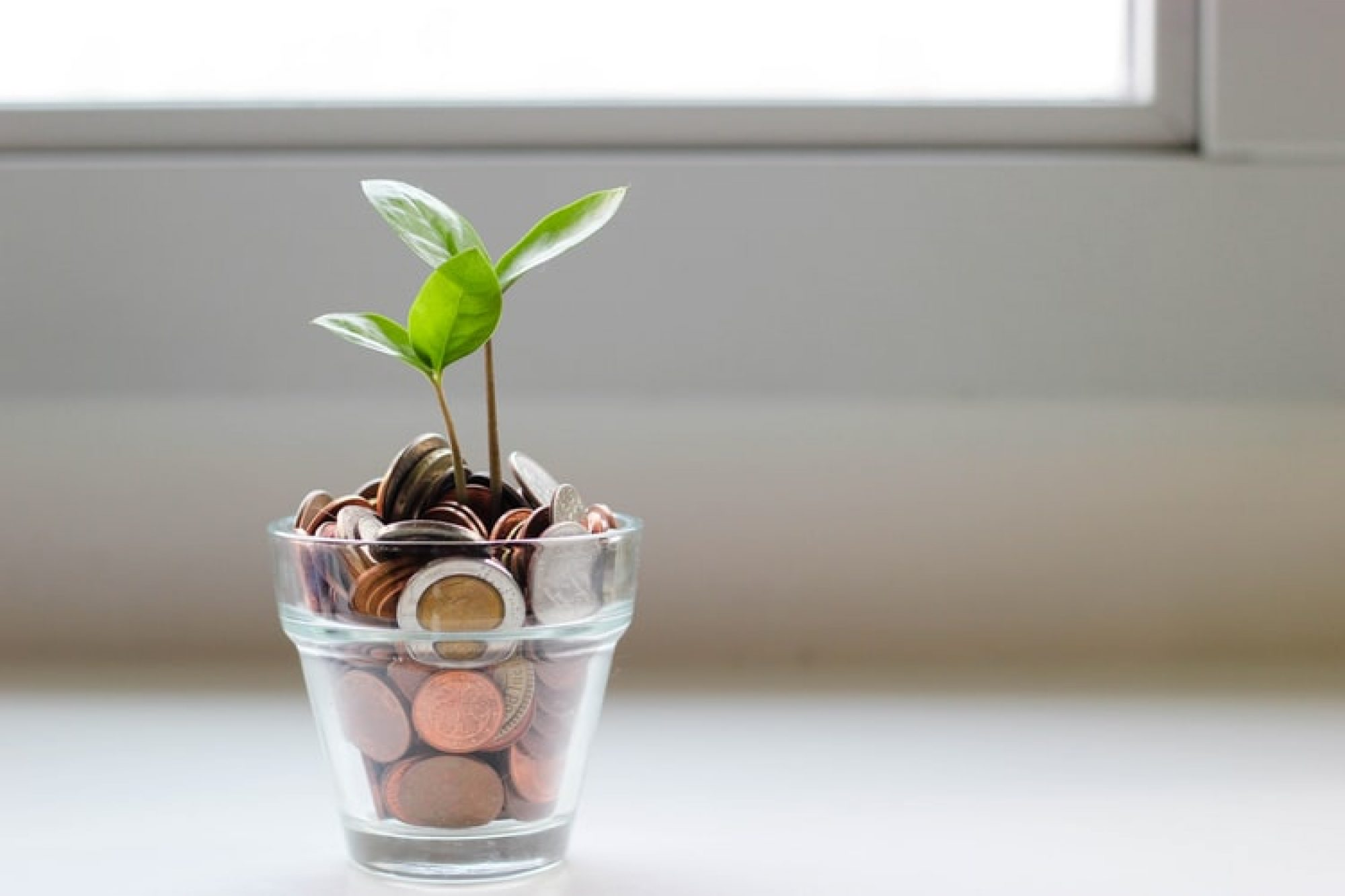 A plant filled with pennies
